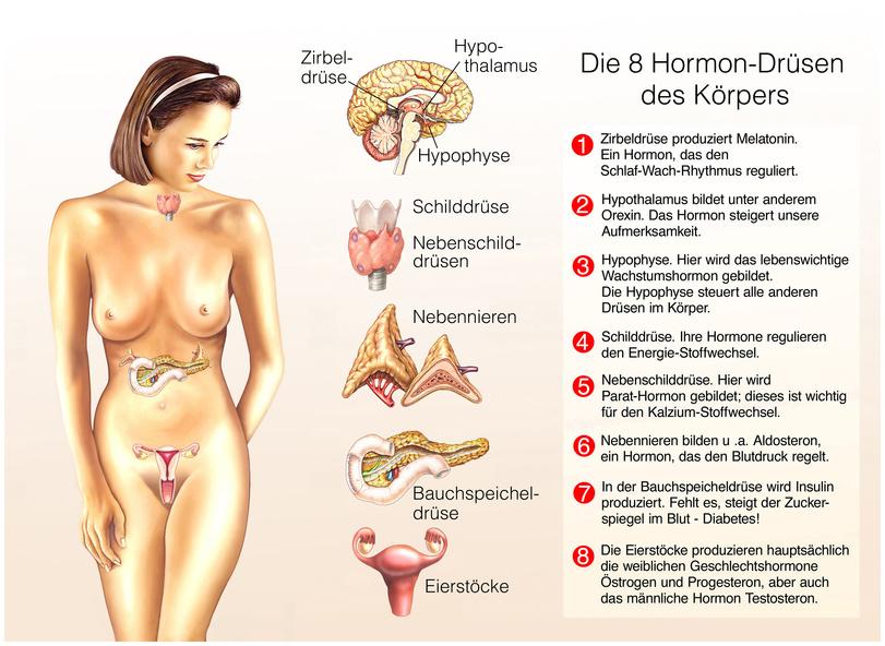 Hormondrüsen der Frau
